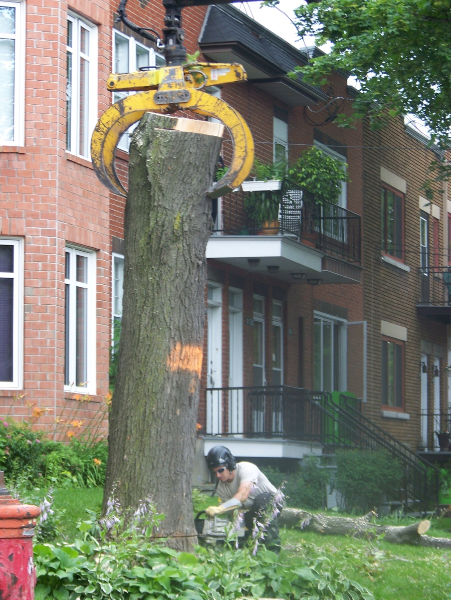 Horticulturalicide on my street. The chainsaws started at omgearly o'clock this morning and they were just finishing up when I left for work at 2 p.m.