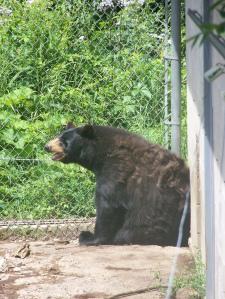 Bear necessities.