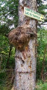 Nothing says spooky like a buffalo head nailed to a tree.