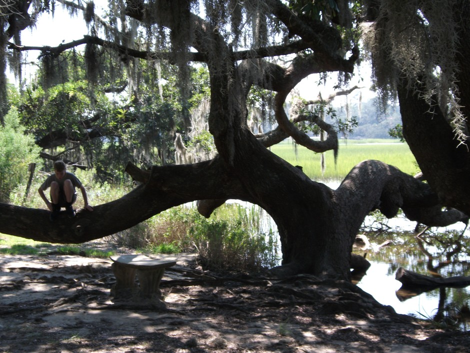 The live oaks at Boone Hall and around Charleston are up to 600 years old.