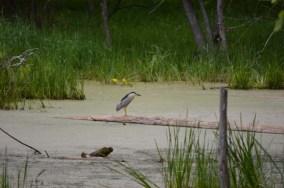 Marguerite dYouville water bird