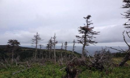 cape breton highlands park trees