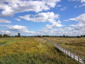 cooper marsh (4)