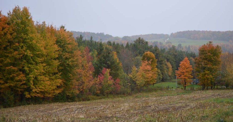fall colours vermont
