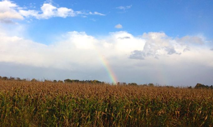 This rainbow dropped behind the cornfields right into Chazy Lake.