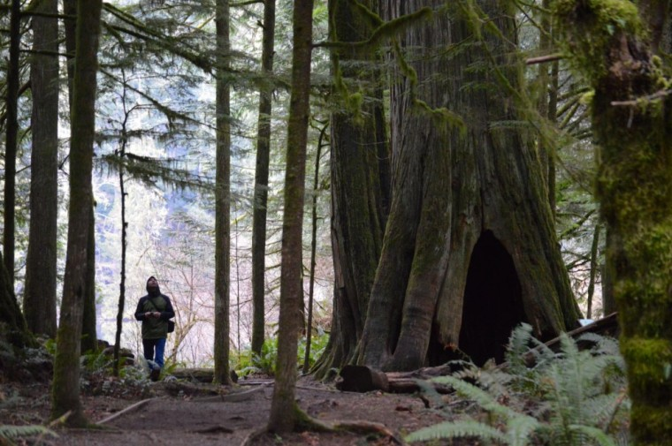 cathedral grove101