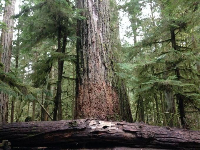 cathedral grove11