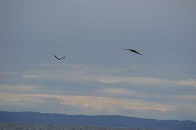 eagles fort rupert bc1